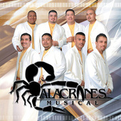 Play & Download Furia Alacranera by Alacranes Musical | Napster