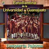 Despierta Paloma by Estudiantina De La Universidad De Guanajuato