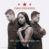 You Got Me Burnin' Up by Funky Green Dogs