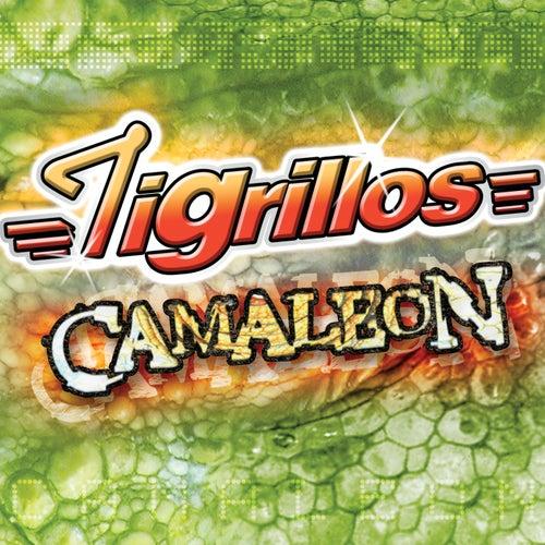 Play & Download Camaleón by Los Tigrillos | Napster