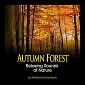 Play & Download Nature Sounds - Autumn Forest Relaxing Sounds of Nature by Meditation Downloads | Napster