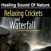 Play & Download Healing Sound of Nature: Relaxing Crickets and Waterfall - Natural Music and White Noise for Yoga, Meditation and SPA Relaxation by Deep Sleep Music | Napster