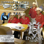 Play & Download Corridos De Altura by Enigma Norteno | Napster