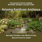 Play & Download Relaxing Rainforest Ambience: Nature Sounds for Meditation, Relaxation and Sleep by David and Steve Gordon | Napster