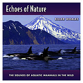 Killer Whales by Echoes of Nature