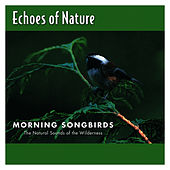 Morning Songbirds by Echoes of Nature