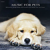Play & Download Music for Pets - Relaxation Songs Dogs and Friends Love While You Are Gone by Music for Pets Specialists | Napster