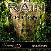 Play & Download Rainforest by Midori   Napster