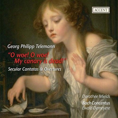 Play & Download Telemann: Overtures - Du angenehmer Weiberorden - Trauer-Music eines kunsterfahrenen by Various Artists | Napster