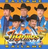Play & Download Báilame by Los Tigrillos | Napster