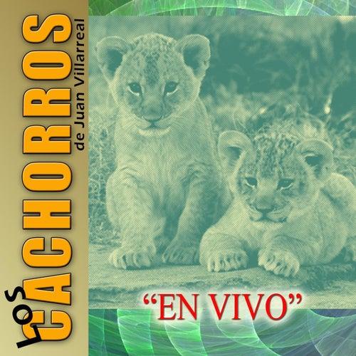 Play & Download En Vivo by Los Cachorros de Juan Villarreal | Napster