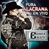Play & Download Pura Alacrana En Vivo by El Compa Chuy | Napster