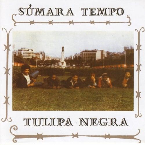 Tulipa Negra - Súmara Tempo
