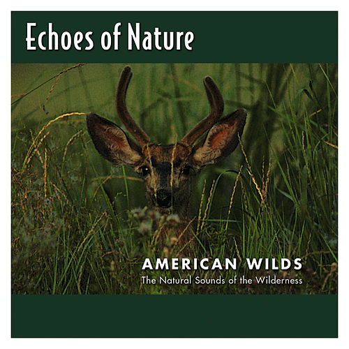 Play & Download American Wilds by Echoes of Nature | Napster