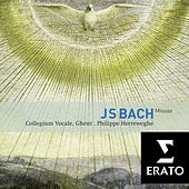 Bach : Masses BWV 233-235, Sanctus BWV 238 by Various Artists