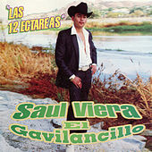 Play & Download El Gavilancillo by Saul Viera