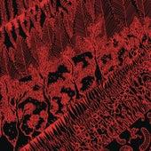 Bodies by Savoir Adore
