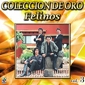 Play & Download Felinos Coleccion De Oro, Vol. 3 - Morena Tenias Que Ser by Felinos | Napster