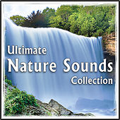 Play & Download Ultimate Nature Sounds Collection: for Healing, Yoga, Spa by Natural White Noise: Music for Meditation, Relaxation, Sleep, Massage Therapy | Napster