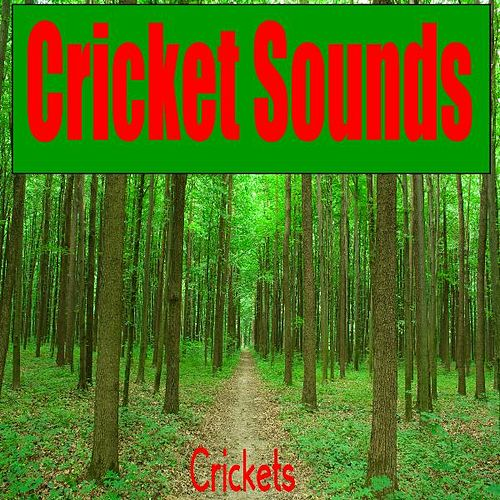 Play & Download Cricket Sounds by The Crickets | Napster