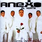 Lloran Las Rosas by Anexo Al Norte