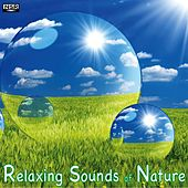 Play & Download Relaxing Sounds of Nature by Relaxing Sounds of Nature | Napster