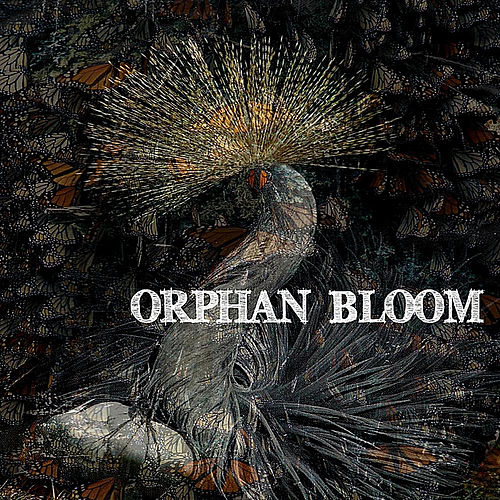 Play & Download Orphan Bloom by Orphan Bloom | Napster