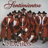 Play & Download Sentimientos by Banda Machos | Napster