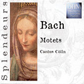 Play & Download Bach: Motets by Cantus Cölln | Napster