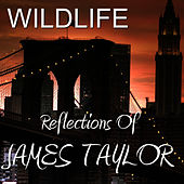 Play & Download Reflections of James Taylor by Wild Life | Napster