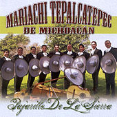 Play & Download Pajarillo De La Sierra by Mariachi Tepalcatepec De Michoacan | Napster