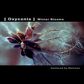 Play & Download OXYCANTA - Winter Blooms by Various Artists | Napster