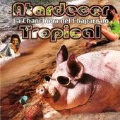 Atardecer Tropical by La Chanchona Del Chaparralo