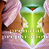 Prenatal Preparation (Creative Progressive House Music) by Various Artists