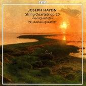 Play & Download Haydn, F.J.: Sun Quartets, Op. 20 by Pellegrini Quartet | Napster