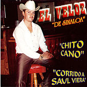 Play & Download Chito Cano by El Veloz De Sinaloa | Napster