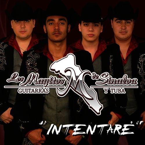Play & Download Intentaré by Los Mayitos De Sinaloa | Napster