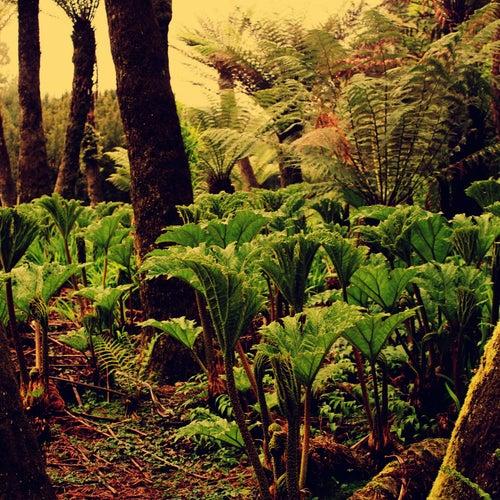Jungle by Ganglians
