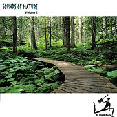 Play & Download Sounds Of Nature by Art World Music | Napster