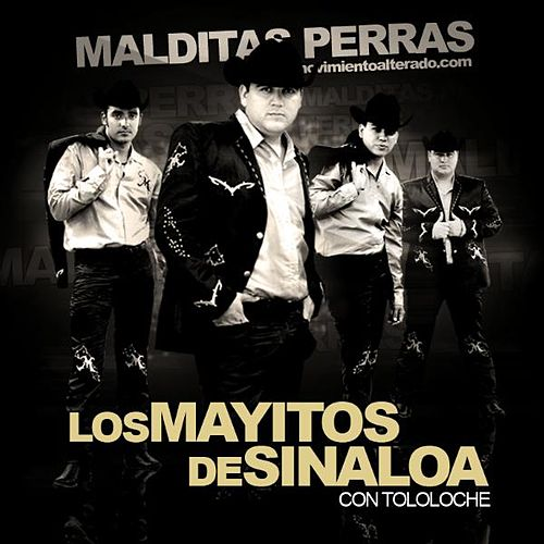 Play & Download Malditas Perras - Con Tololoche (En Vivo) by Los Mayitos De Sinaloa | Napster