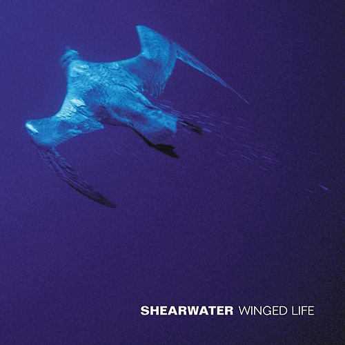 Play & Download Winged Life by Shearwater | Napster