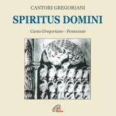 Play & Download Spiritus domini by Fulvio Rampi Cantori Gregoriani | Napster