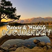 Play & Download Nature & Wildlife Documentary (Music for Documentaries, Ambient, World Music, Landscapes, New Age) by Various Artists | Napster
