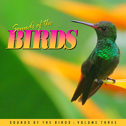 Play & Download Relaxing Sounds of the Birds Vol. 3 by Various Artists | Napster