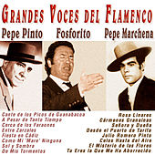 Play & Download Grandes Voces del Flamenco by Various Artists | Napster
