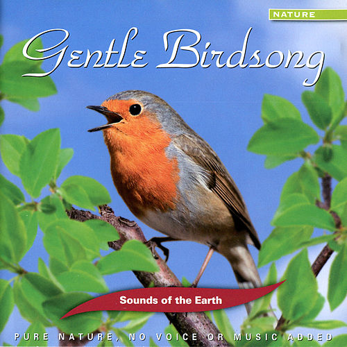 Play & Download Gentle Birdsong by Sounds Of The Earth | Napster