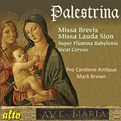 Palestrina: Missa Brevis; Missa Lauda Sion by Pro Cantione Antiqua
