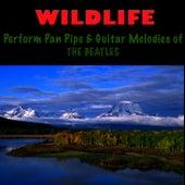 Pan Pipe & Guitar Melodies of The Beatles by Wildlife