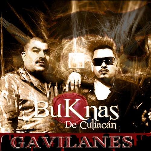 Play & Download Gavilanes by Los Buknas De Culiacan | Napster