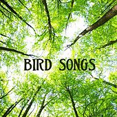 Bird Songs: Relaxing Sounds, Sounds of Nature Music for Massage, Relaxation, Serenity, Stress Relief, Spa, Meditation and Spiritual Wellness by Bird Songs Nature Music Specialists